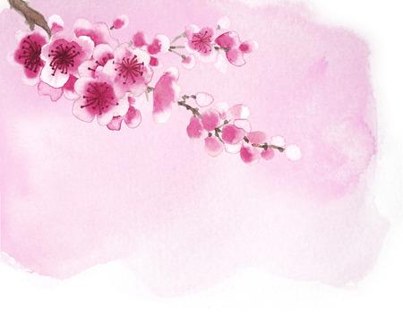 flor de durazno: Acuarela ramas dibujadas a mano de sakura aislado en blanco Foto de archivo