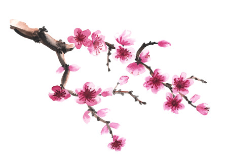 Aquarel hand getekende tak van sakura op wit wordt geïsoleerd Stockfoto
