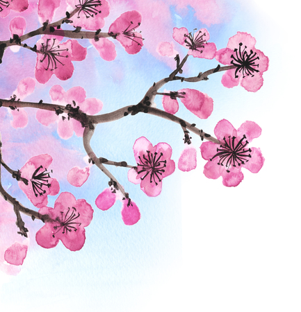 Watercolor hand-drawn branches of sakura isolated on white Stock Photo