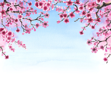 Watercolor hand-drawn branches of sakura isolated on white Banque d'images