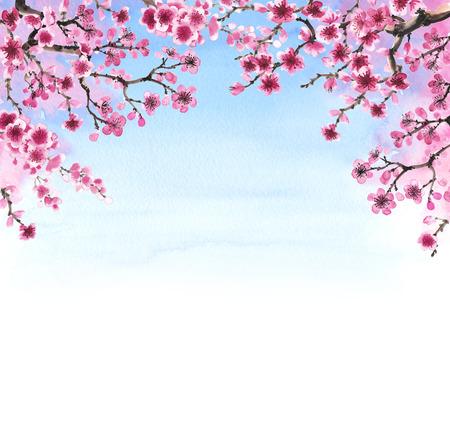 Branches dessinés à la main Aquarelle de sakura isolé sur blanc Banque d'images - 55324799