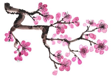 Aquarel hand getekende tak van sakura op wit wordt geïsoleerd