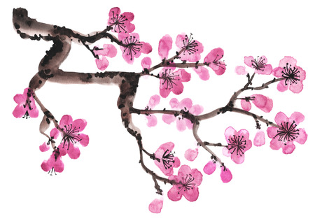 blossom tree: Watercolor hand-drawn branch of sakura isolated on white
