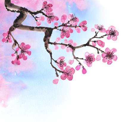 cherry blossom illustration: Watercolor hand-drawn branches of sakura isolated on white Stock Photo