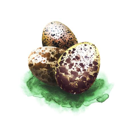 huevo blanco: Huevos de Pascua en hierba mano dibujadas con acuarelas aislados en blanco