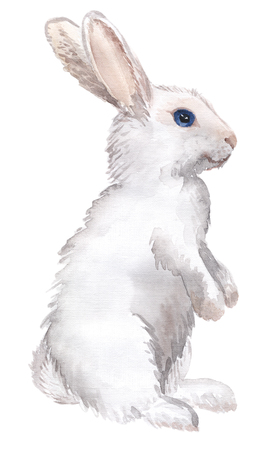 Watercolor hand-drawn white rabbit isolated on white