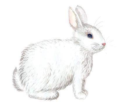 Acuarela dibujado a mano conejo blanco aislado en blanco