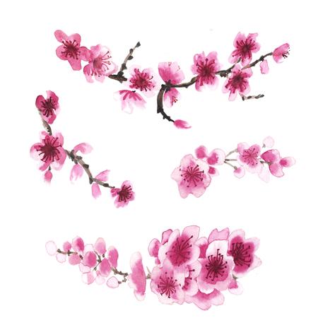 Aquarel hand getekende tak van sakura op wit wordt geïsoleerd Stockfoto - 55324854