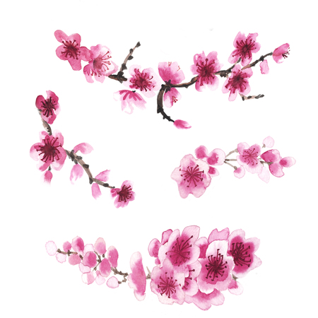 Peach flower: Watercolor hand-drawn branch of sakura isolated on white