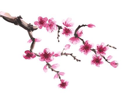 Aquarel hand getekende tak van sakura op wit wordt geïsoleerd Stockfoto - 55324875