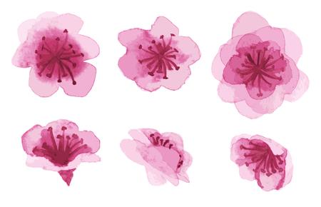 水彩の手描きの桜の花が白で隔離のセット