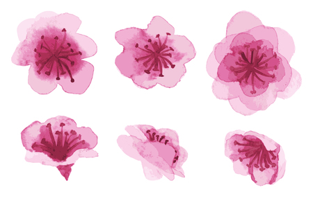 Set of watercolor hand-drawn sakura flowers isolated on white Illustration