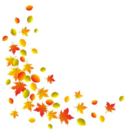 red leaves: Autumn decorative border with yellow, orange and red leaves isolated on white
