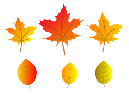tree leaves: Set of red, orange and yellow autumn tree leaves