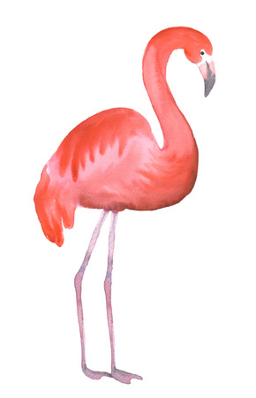 Pink flamingo isolated on white. Hand drawn watercolor painting