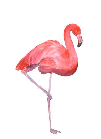flamenco ave: Flamenco rosado aislado en blanco. Pintura de la mano de la acuarela dibujada Foto de archivo