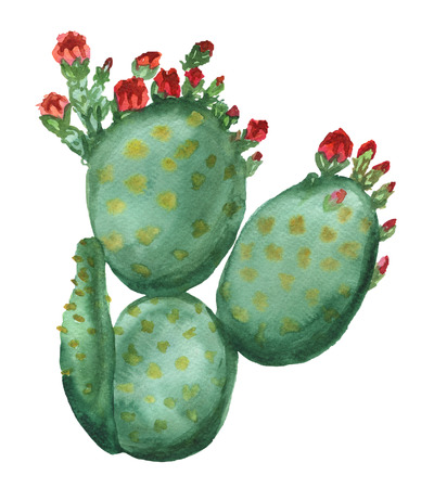 opuntia: Blooming opuntia cactus with red flowers isolated on white Stock Photo
