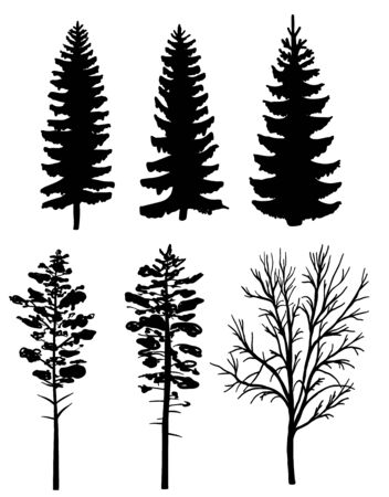 pine trees: Set of black silhouettes of forest trees, fir and pine