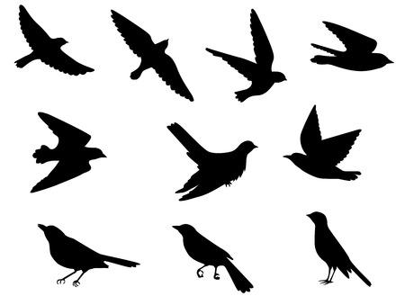 Conjunto de siluetas de aves voladoras y sentadas Ilustración de vector