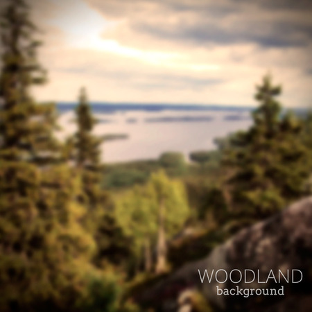 forest wood: Blurry forest on hill and lake background