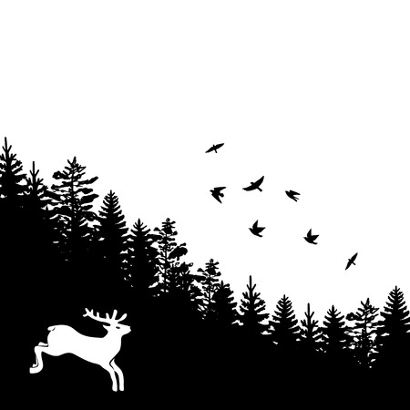 pine forest: Woodland background with black silhouettes of fir trees and pines with birds Illustration