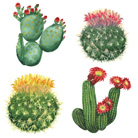 cactus set 스톡 콘텐츠