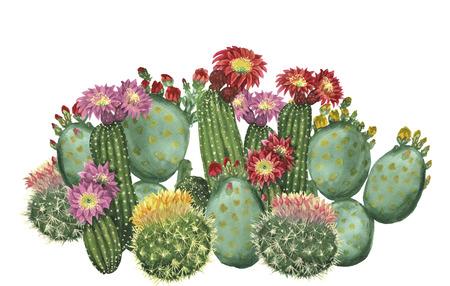 cactus set 写真素材