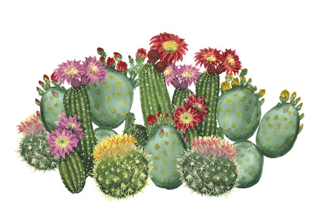 cactus set Stock Photo