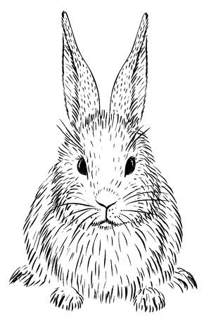 Boceto de conejo Foto de archivo - 71723192