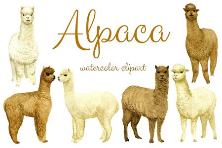 Alpaca set Standard-Bild