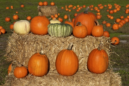 Bright Pumpkins on a hay bale photo