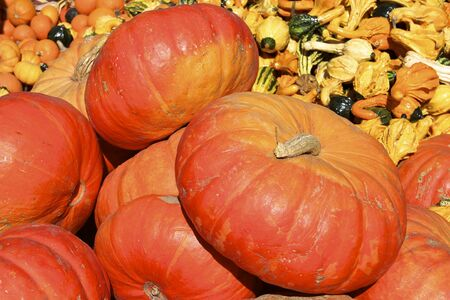 Bright Orange Pumpkins and Gourds Stock Photo - 11143195