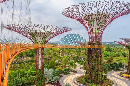 skyway: Singapore Supertrees at the Gardens By The Bay Editorial