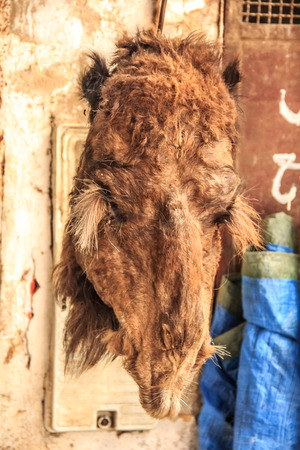 souk: Butchered camel head at the souk in Fes, Morocco