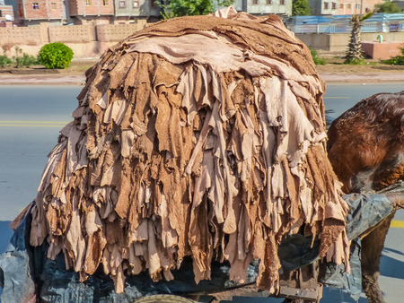 hides: Donkey carrying hides at a tannery in Marrakech, Morocco Stock Photo