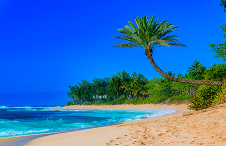 Palm tree hanging over a tropical lagoon beach with blue sky