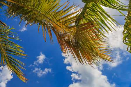 Tropical palm tree fronds and deep blue skies with scattered clouds