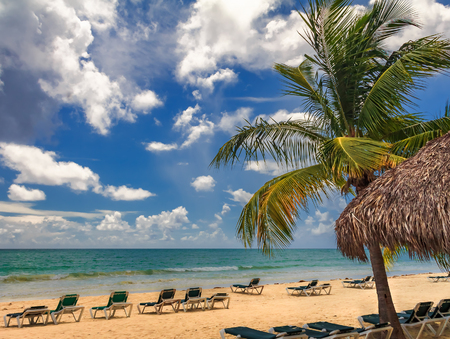 Beach chairs by the turquoise water of the Caribbean sea on a tropical beach with a palm tree in the foreground in Freeport, Bahamas