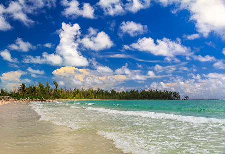 Turquoise waters on a tropical sandy beach in the Caribbean sea with a treeline of bahamian pine trees in the background and beautiful clouds in the sky in Freeport, Bahamas