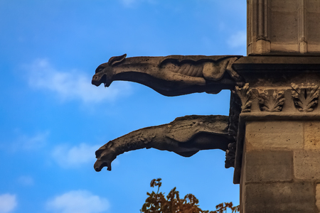 Gothic gargoyles covered in moss on the facade of the famous Notre Dame de Paris Cathedral in Paris France with rain drops falling from their mouth