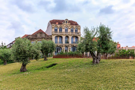 Olive trees on Praca de Lisboa hill with facades of traditional Portuguese houses in the background in Porto, Portugal on a cloudy day