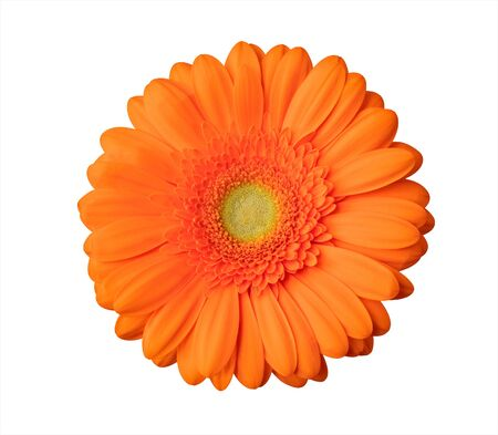 Gerbera flower orange flower isolated on white background