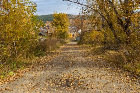 Autumn road home. Abandoned empty street in colorful autumn with trees orange yellow. Beautiful fall season outdoors