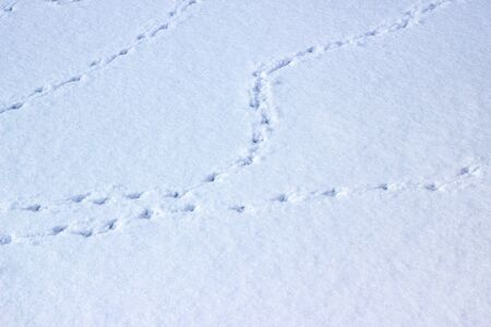 Tracks of a pigeon on fresh snow. Natural winter background