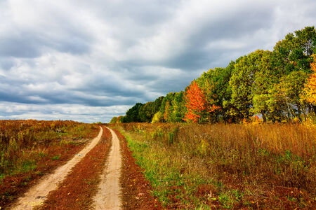 bright colors of autumn trees. Autumn landscape.