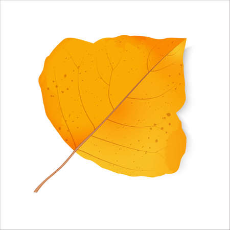 Autumn leaf. The foliage of poplar. Back to school. Change of seasons. Halloween. Bright design elements on a white background. Raster illustration.