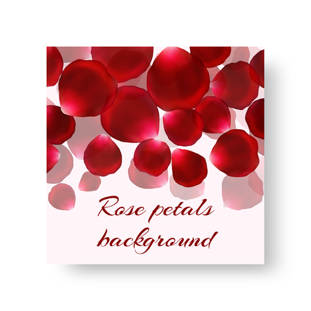 Template greeting card with flying red rose petals