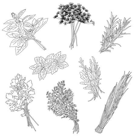 Cooking herbs and spices. Vintage vector illustration, hand draw, doodle style Vectores