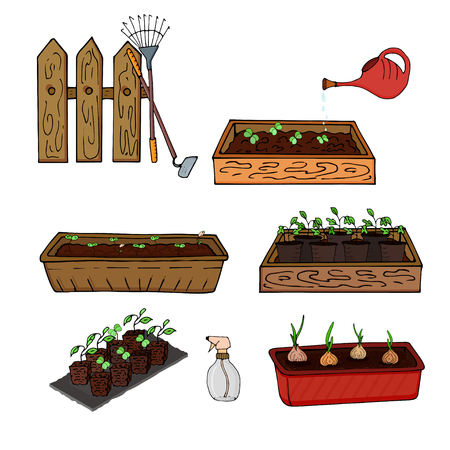 Wooden boxes with seedlings of young plants and onions for gardening. Vector