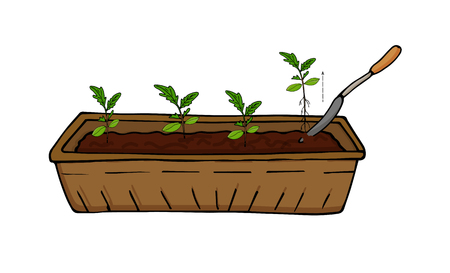 Growing seedlings of vegetables and flowers, transplanting sprouts. Vector Stock Vector - 115192891